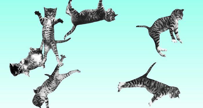 web-divertida-cat